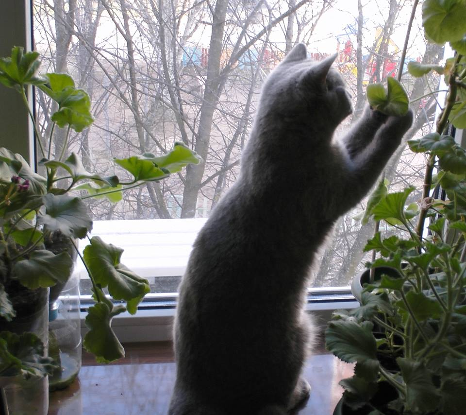 Картинки по запросу Демонстративный кот