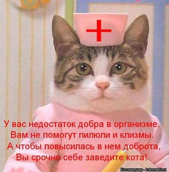 Смешные поздравления от котов 337