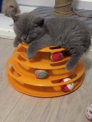 будни котят