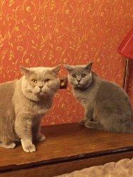 Балуша и Филя