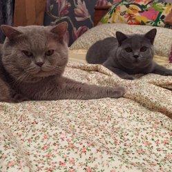 Балуша и Филл
