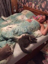 кошки дома